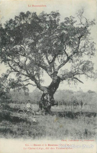 """El roble de los """"trabucaires"""",en Morellàs. Se dice que en el tronco vacío se escondían los saltadores que robaban a los viajeros  que iban y venían de Perpiñán"""